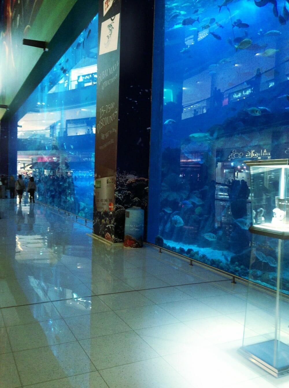 activités à faire avec des enfants à Dubaï : aquarium et zoo aquatique