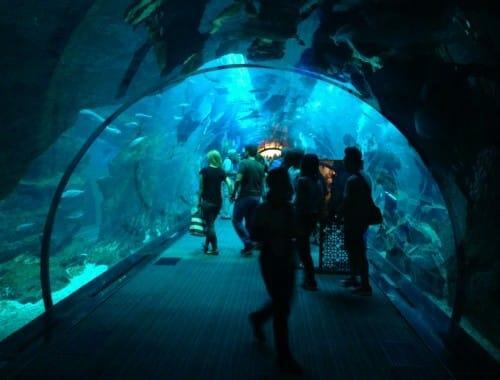 vacances en famille a dubai - zoo aquatique